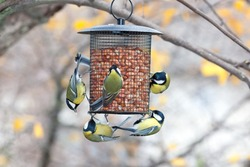 Birdfeeder. Great Tit (Parus major)