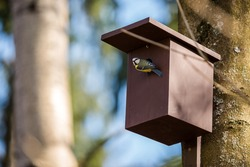 Birdhouse for Parus major, Cyanistes caeruleus, Blue tit, Great tit. Birdhouse from wood with bird plased on tree in park or woodland.