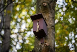Birdhouse for Parus major, Cyanistes caeruleus, Blue tit, Great tit. Birdhouse from wood with bird plased on tree in park or woodland. Used with leftoffs, needs cleaning.