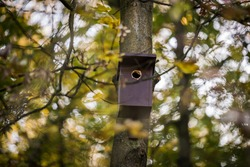 Birdhouse for Parus major, Cyanistes caeruleus, Blue tit, Great tit. Birdhouse from wood with bird plased on tree in park or woodland. Used and damaged on tree in autumn.
