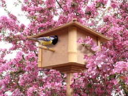 birdhouse in pink blossoming garden with birdie