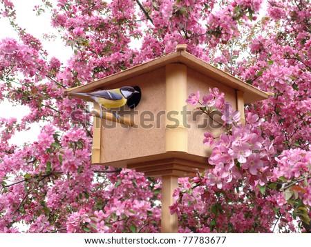birdhouse in pink blossoming garden with birdie