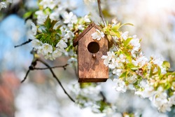 Birdhouse in spring with blossom cherryflower