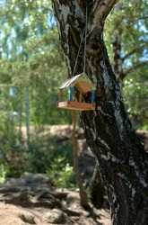 Birdhouse made of wood on a tree in the forest. Woodland. Caring for the birds. Food for the birds.