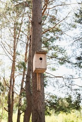 birdhouse on the tree, Pine forest