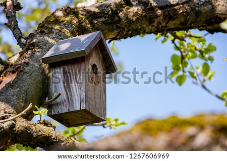 Birdhouse on tree at springtime. Branch of fruit tree with bird house.