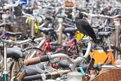 Birdlife in the city. Nature urban environment. Byke parking lot
