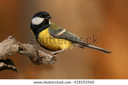 birds #418192960