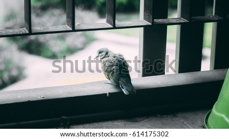 birds #614175302
