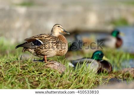 birds and animals in wildlife....