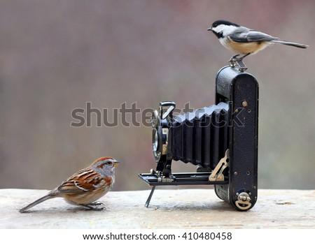 Birds and antique camera