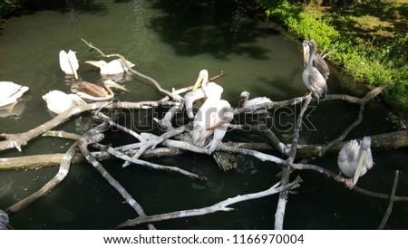 Birds and Avian Animals #1166970004