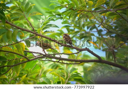 Birds and Nature  #773997922