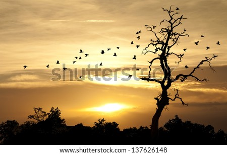 birds and sunset #137626148