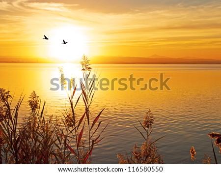birds and the sun #116580550