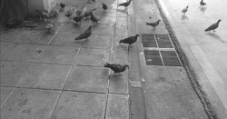 Birds are eating some food on footpath