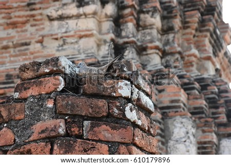 Birds are laying eggs in the nest. In the area of ??historic Wat Mahathat Ayutthaya (Dove) Stok fotoğraf ©