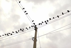 birds are resting on electrical supply wire
