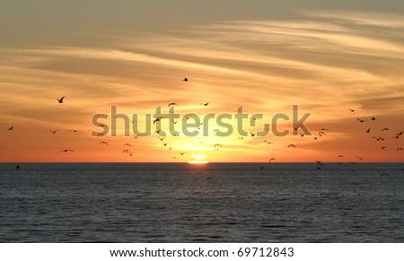 Birds at sunset - stock photo