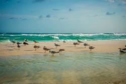 Birds at the Beach in Destin Florida