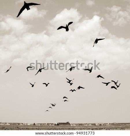Birds at the sky