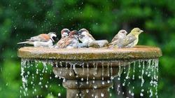 Birds bathing together at a bird bath