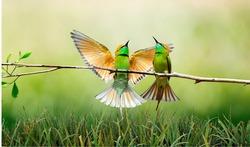 birds, branch, grass, feathers, plumage, green, couple, avian, ornithology