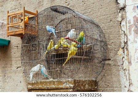 Birds cage. #576102256