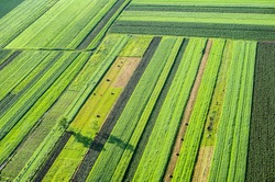 Birds Eye View of the Fields and Agricultural Parcel. Aerial Views.