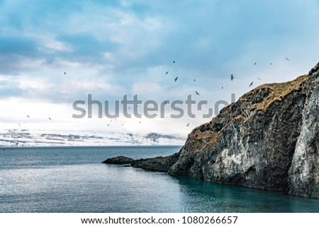 birds flocking on a rock by the sea #1080266657