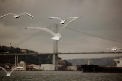 Birds fly on the bridge in Istanbul