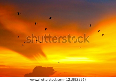 Birds fly over the region in the Thung Na. #1218825367