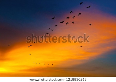 Birds fly over the region in the Thung Na. #1218830263