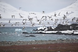 Birds flying above Arctic fjord