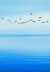 birds flying above blue sea, freedom and happiness concept,spring summer background