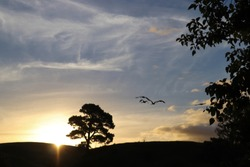 Birds Flying Above Sky during Sunset. Silhouette of Seagulls, trees and hills.