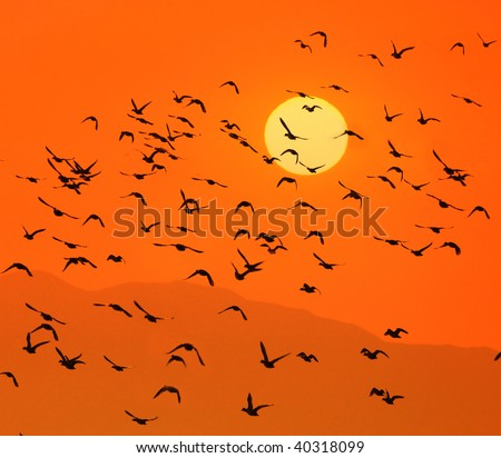Birds flying above the sunset(See more birds and sunset backgrounds in my portfolio).