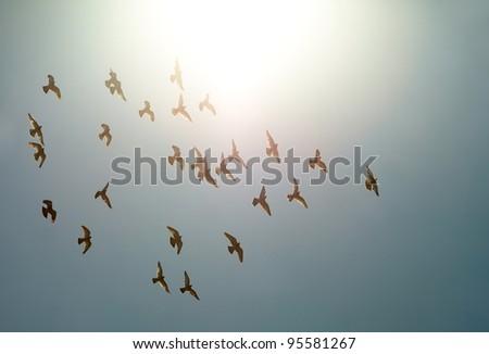 Birds flying against direct sunlight