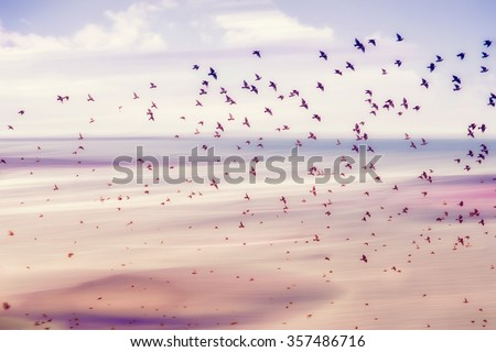 birds flying and abstract sky ,spring background abstract happy background,freedom birds concept,symbol of liberty and freedom #357486716