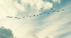 birds flying and abstract sky ,spring background abstract happy background,freedom concept
