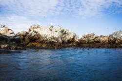 birds flying and marine fauna resting on rocks with the sunny sky over the Marcona sea