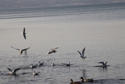 birds flying and swimming on lake