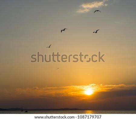 Birds flying at the sunset in Zadar, Croatia #1087179707