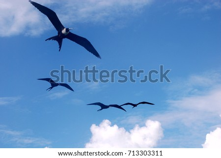 Birds flying background #713303311