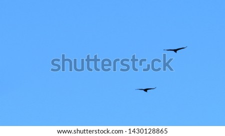 birds, flying birds, birds, insects, closeup, macro, landscapes, #1430128865