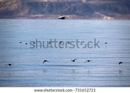 Birds flying close to water surface