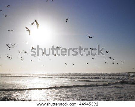 Birds flying from beach over the incoming tides. Horizontal shot. - stock photo