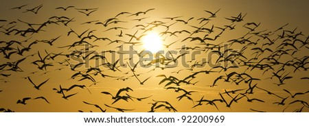 Birds flying in front of Sunset