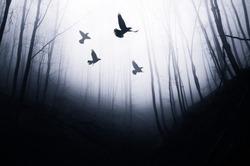 birds flying in magical forest, fantasy landscape