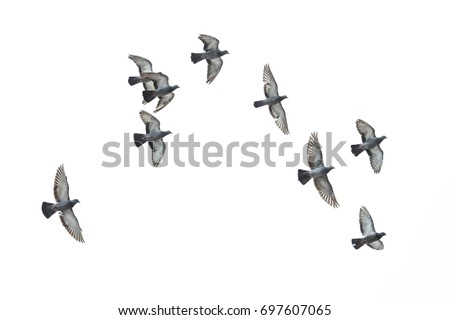 Birds flying in the air